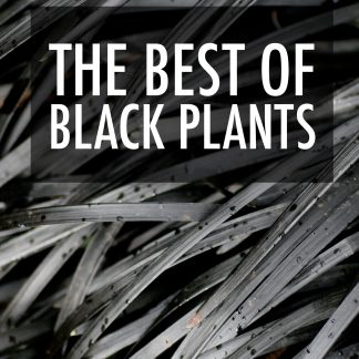 The Best of Black Plants eBook
