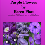 Purple Flowers eBook