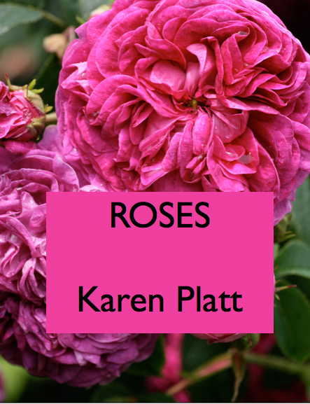 Roses book cover